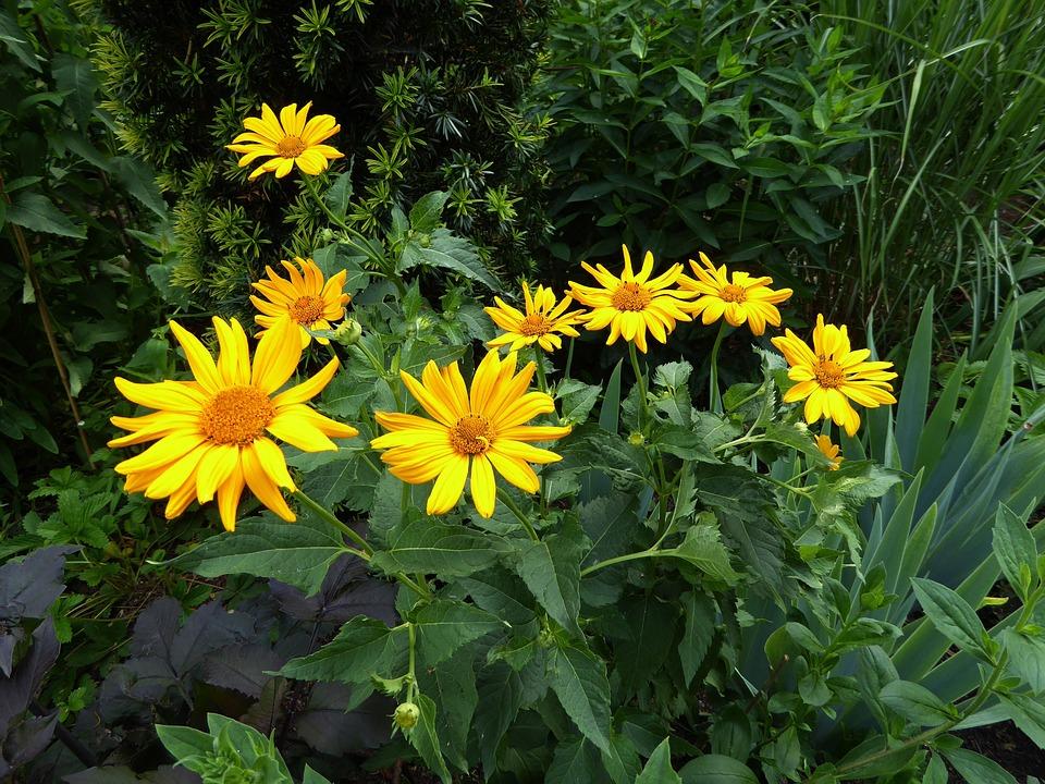 yellow flowers 1608445 960 720 - Sastojci naših preparata